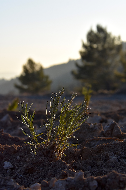Plants en terre